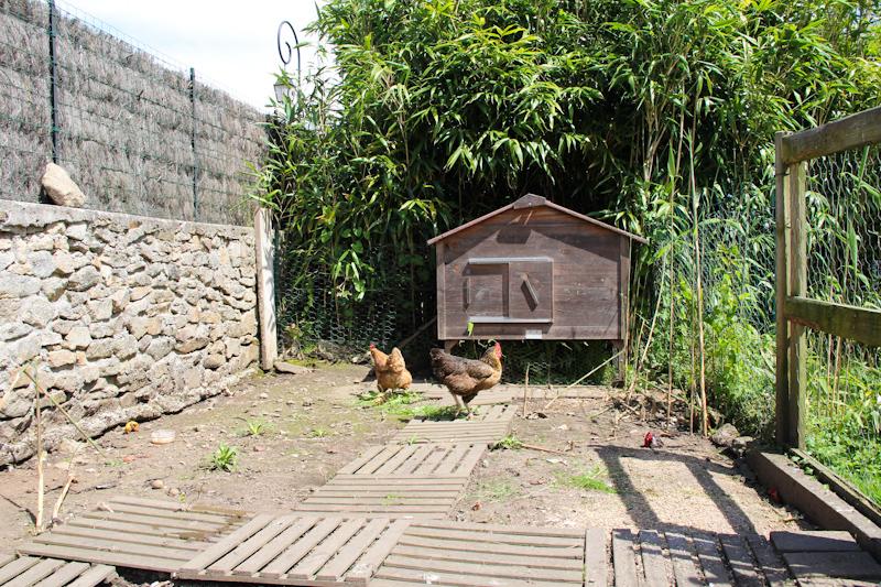 Des Poules Dans Le Jardin Le Poulailler Le Blog De