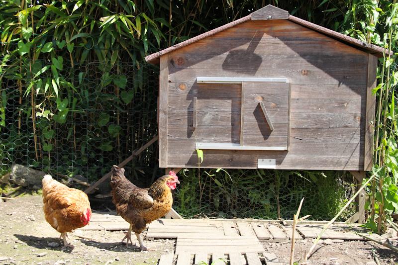 WBZH_poules02