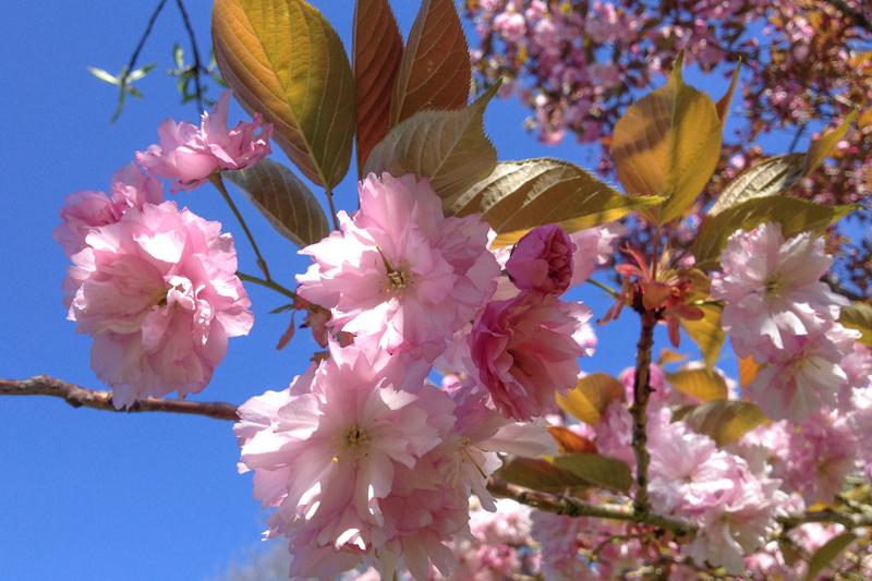 WBZH_fleursprintemps16