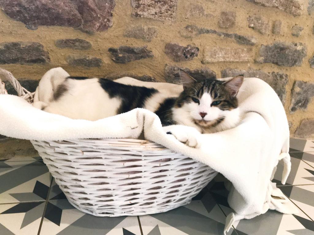 Mon Chat Dort Sur Mes Pieds adopter un chaton | le blog de marjoliemaman